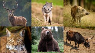 collection of animals now extinct in Wales