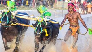 Srinivas Gowda in his winning Kambala race