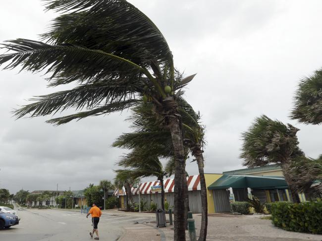 Palm trees sway in high gusts of wind in Vero Beach, Florida. Picture: Lynne Sladky/AP.