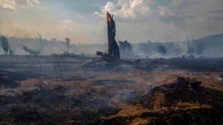 Deforestation Amazon