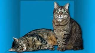 Schrodinger's Cat paradox - illustration