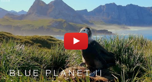 Youtube post by BBC: Albatrosses are ingesting plastic - Blue Planet II  Episode 7 Preview - BBC One
