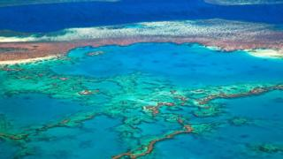 An overhead view of coral on the Great Barrier Reef