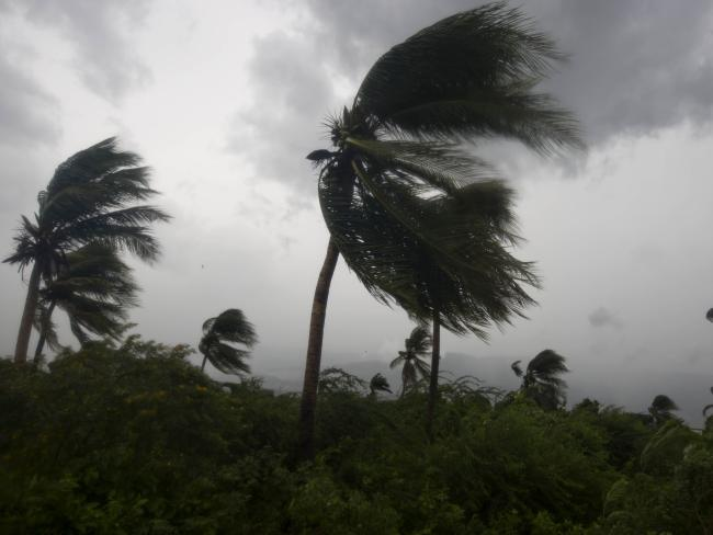 Wind blows coconut trees during the passage of Hurricane Matthew in Port-au-Prince, Haiti. Picture: AP