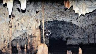 Bats flying around the cave