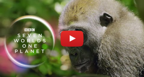 Youtube post by BBC Earth: Seven Worlds, One Planet  Extended Trailer (ft Sia and Hans Zimmer) | New David Attenborough Series