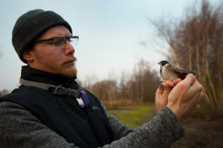 Paul Perrins holds a reed bunting before releasing it back into the wild