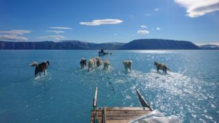 Steffen Olsen's picture of sea ice